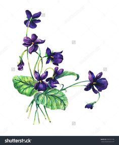 Violets background, watercolor composition. Flower backdrop. Decoration with blooming
