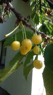 mój ogród warzywny: Oryginalna konfitura czereśniowa