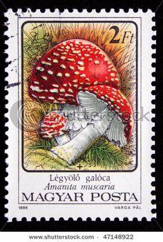 [][][] HUNGARY - CIRCA 1986: A stamp printed in Hungary shows mushrooms Fly agaric - Amanita muscaria