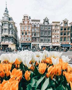Spring style!! TULIPS in Amsterdam!! Of course! So very pretty!