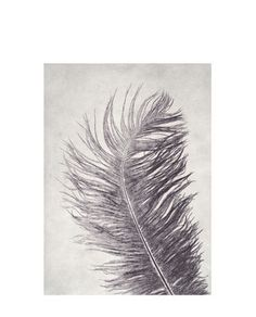 Print Feather grey