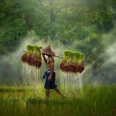 Rice field's farmer in by . Rice field's farmer 🌾 in by . ========================= Join us ⭐️⭐️⭐️⭐️⭐️ Amazing pictures from around the 🌏 in our gallery. Village Photography, Nature Photography, People Around The World, Around The Worlds, Beautiful Places, Beautiful Pictures, Nature Pictures, Wonderful Places, Thailand Photos