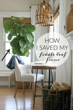 How I Saved My Fig Tree by Doing 6 Simple Things