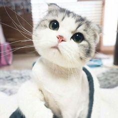 Cute-Overload: http://cute-overload.tumblr.com source: http://imgur.com/r/aww/nOL080G