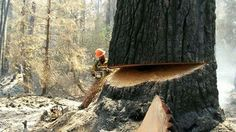 Jim Godfrey submits photo of his friend, Brandon, working on one of the fires in the northwest