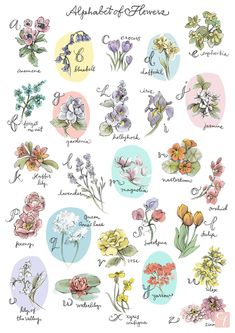 Alphabet of Flowers Illustrated Art Print (Archival Giclée Fine Art Print of Original Illustrated Design) - All For Herbs And Plants Flower Names, Flower Art, Pencil Illustration, Botanical Illustration, Design Alphabet, Buch Design, Art Design, Flower Meanings, Flowers And Their Meanings