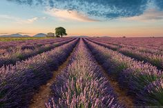 Colors of Valensole | Scouting shooting locations all the pr… | Flickr