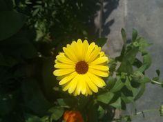 Why People, Beautiful Flowers, Dandelion, It Hurts, The Originals, Origins, Empty, Garden, Plants