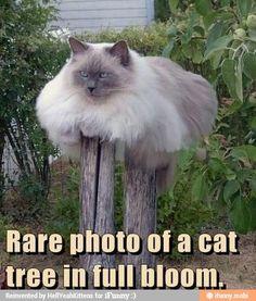 Rare photo of cat tree / iFunny :)