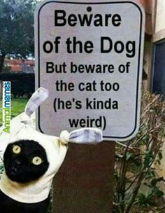 Beware of the dog. But beware of the cat too (he's kinda weird)
