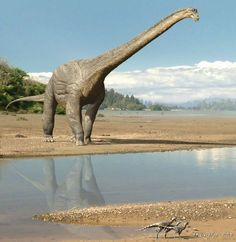 Dinosaur discovery in Winton could hold key to sauropods diet. Scientists in Western Queensland Australia are unearthing the most complete sauropod skeleton ever discovered in the Southern Hemisphere. Dinosaur Train, Dinosaur Skeleton, Dinosaur Art, Dinosaur Museum, Dinosaur Fossils, Jurassic World, Jurassic Park, Reptiles And Amphibians, Mammals
