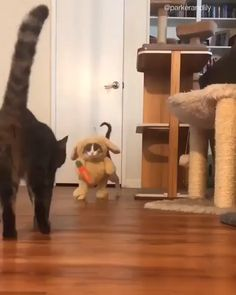 You are in the right place about Cutest Baby Animals videos Here Funny Animal Videos, Cute Funny Animals, Funny Animal Pictures, Cute Baby Animals, Animals And Pets, Cute Cats, Funny Cats, Videos Funny, Cats Humor