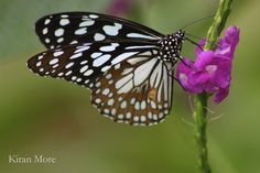 Butterfly by Kiran More on 500px