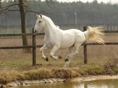 Wee... horse be like, I can fly! Lipicai