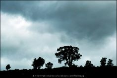 [2014 - Macedo de Cavaleiros - Espanha / España / Spain ] #fotografia #fotografias #photography #foto #fotos #photo #photos #local #locais #locals #paisagem #paisaje #landscape #paisagens #paisajes #landscapes #europa #europe #natureza #naturaleza #nature #arvore #arvores #arbol #arboles #tree #trees @Visit Portugal @ePortugal