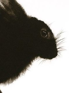 Hare by Sarah Gillespie. (Detail of drypoint engraving)