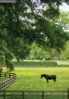 Horse Stables, Horse Barns, Country Farm, Country Life, Country Living, Esprit Country, Future Farms, Horse Ranch, Dream Barn