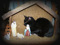 cat in manger   Everyone's welcome at Christmas.