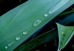 Apa structurata: Secretele apei Hunza
