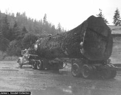 1950 International L210 Hauling this Enormous Spruce out of Euchre Creek, a tributary of the Siletz River. It was logged in 1956 by Johnny Yasek. The log took two cats and a arch to move the log from its original location to the landing. The log was to large to be loaded with the tongs of the line machine, so they had to use straps and load the log onto the truck one end at a time. The log was 13 ft diameter at the butt end