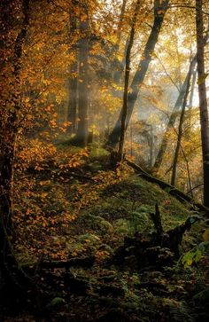 Autumn haze in the woods by Christian Möhrle (Germany) Colors Of Fire, Celtic Mythology, Magic Forest, Back To Nature, Fresh Water, Greenery, Natural Beauty, Germany, Country Roads