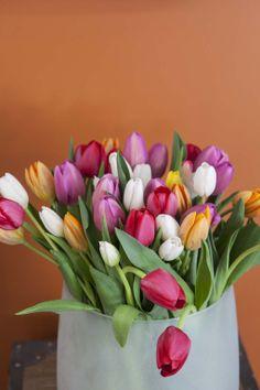 Fargerike tulipaner