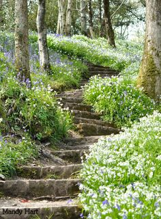 Bluebell stairs by Mandy Hart from wanderthewood Beautiful Landscapes, Beautiful Gardens, Nature Aesthetic, Dream Garden, Pretty Pictures, Aesthetic Pictures, Mother Nature, Aesthetic Wallpapers, Countryside