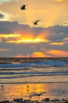 Beautiful early morning beach sunrise scenery in Florida with seagulls in flight.