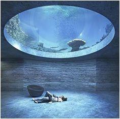 boltshauser architekten beats zaha hadid + MVRDV to design basel aquarium Zaha Hadid, Aquarium Design, Aquarium Architecture, Architecture Design, Basel, Amazing Aquariums, Nature Aquarium, Aquarium Fish, Pool Designs