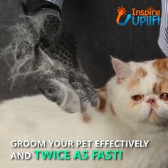 Pet Grooming Gloves - ⭐⭐⭐⭐⭐ Pet Grooming Gloves - ⭐⭐⭐⭐⭐ Forget about shedding! With our Pet Grooming Gloves, all that shedding and hairy furniture will seem like just an awful nightmare. Now you can eliminate those pesky hairballs before they a Cute Funny Animals, Funny Dogs, Cute Dogs, Sweet Dogs, Pet Grooming, Grooming Salon, Pet Accessories, Cat Toys, Craft Videos