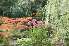 Garten im August In the garden