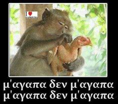 Funny Greek, Funny Memes, Jokes, Frases Humor, Humor Grafico, 30, Funny Pictures, World, Cats
