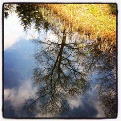 Mirror @ Apenheul, The Netherlands.