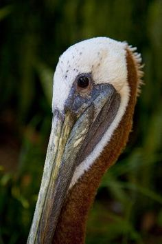 by tommcdow47 Suncoast Seabird Sanctuary - Indian Shores - Reviews of Suncoast Seabird Sanctuary - TripAdvisor