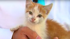 A kitten interrupted a live newscast in Michigan—and we're already so obsessed. Plus, WXYZ reporter Nima Shaffe has got jokes! We kinda wish he would've kept the kitten; that would've made for a wonderful love story. Seriously though, this rambunctious fur baby is expected to be up for adoption at the Huron Valley Humane Society very soon. Someone go swoop up this majestic creature immediately!
