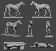 ArtStation - Blue - Canine ecorche 3dtotal, Gael Kerchenbaum Dog Anatomy, Animal Anatomy, Anatomy Art, Anatomy Sculpture, Dog Sculpture, Animal Sculptures, Animal Sketches, Animal Drawings, Animal Skeletons