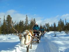 Nutti Sámi Siida Leads the Way for Responsible Development of Indigenous Ecotourism in Swedish Sápmi