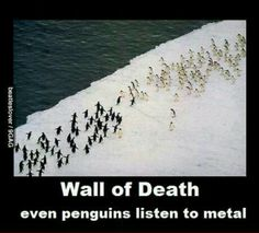Penguin WALL OF DEATH.
