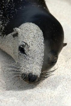 Seals in the sand