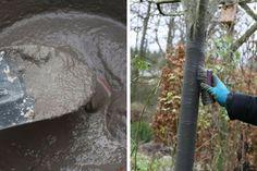 Cendre de bois : comment l'utiliser au jardin en 10 questions - répones - Blog Promesse de fleurs