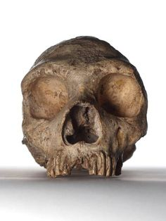 Neanderthals' large eyes led to their downfall, says study - Science - News - The Independent