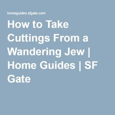 How to Take Cuttings From a Wandering Jew | Home Guides | SF Gate