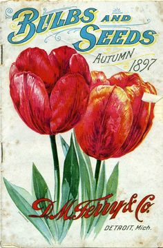 Vintage bulbs and seeds package Vintage Diy, Images Vintage, Looks Vintage, Vintage Labels, Vintage Ephemera, Vintage Postcards, Shabby Vintage, Garden Catalogs, Seed Catalogs