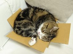 Awww. Maru and his too small box. D: <3