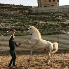 Super Cute Animals, Unique Animals, Cute Little Animals, Nature Animals, Cute Funny Animals, Funny Horses, Cute Horses, Pretty Horses, Most Beautiful Horses