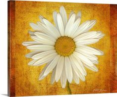 Vitaly Geyman Premium Thick-Wrap Canvas Wall Art Print entitled Daisy in Gold, None