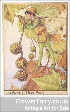 One of the Flower Fairies by Cicely Mary Barker.