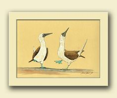 Blue Footed Bobbies seabird animal. Birds nursery home decor. Marine birds art wall .  This is an original watercolor painting made by me, Juan Bosco.