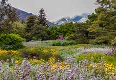 image of Spring wildflowers in the SBBG Meadow, photo by Ian K. Ross