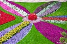 Miracle Garden Dubai – The Largest Natural Flower Garden ( So Beautiful)